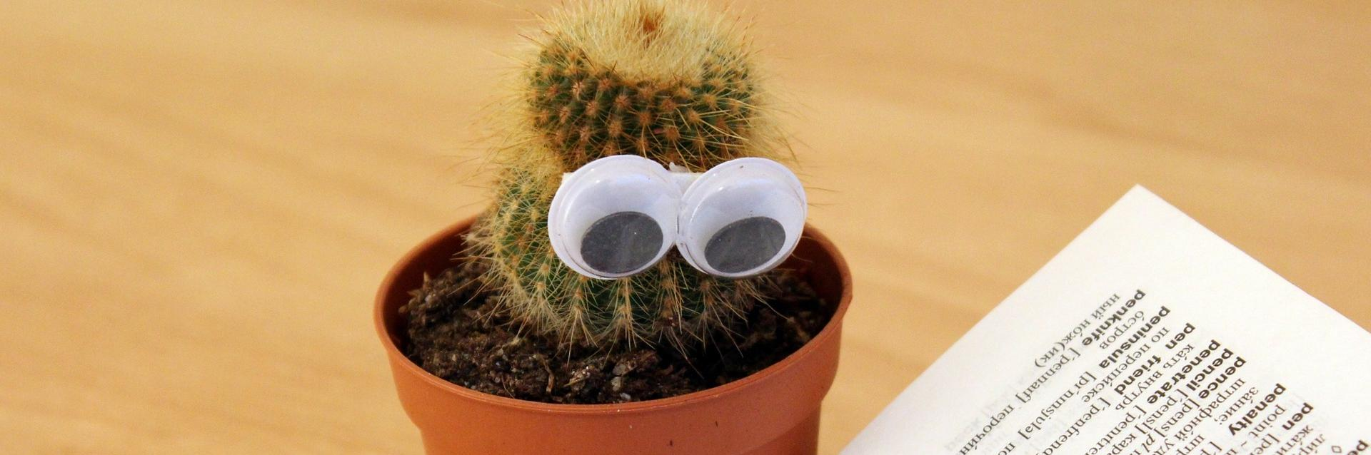 """Kaktus jolle on liimattu irtosilmät ja laitettu """"lukemaan"""" sanakirjaa."""